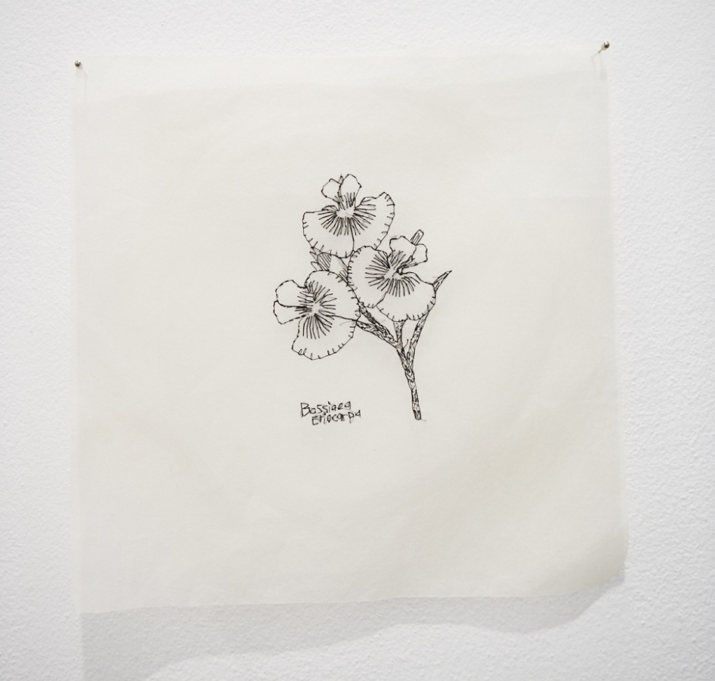 Angela Ferolla, Bossiaea Eriocarpa, 2021, hand stitching on cotton organdy, 29 x 29cm. Photography by Rebecca Mansell